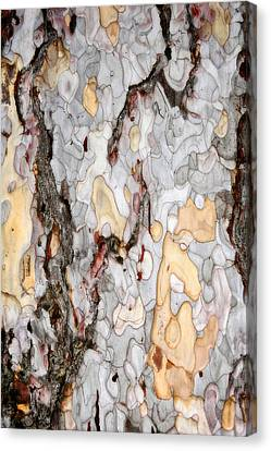 An Bark Of Old Pine Canvas Print