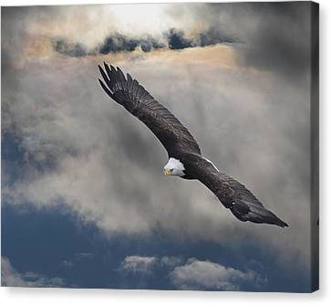 An Eagle In Flight Rising Above The Canvas Print by Robert Bartow