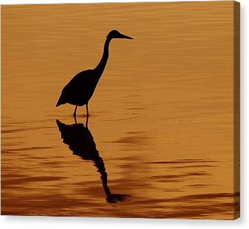 An Early Morning Dip Canvas Print by Tony Beck