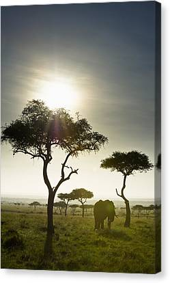 An Elephant Walks Among The Trees Kenya Canvas Print by David DuChemin