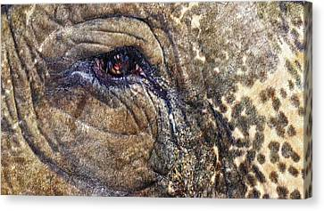 Canvas Print featuring the photograph An Elephants Tear by Kelly Reber