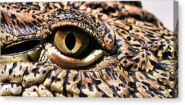 An Eye On You Canvas Print by JC Findley