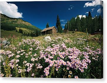 An Old Miners Cabin With Purple Asters Canvas Print by Richard Nowitz