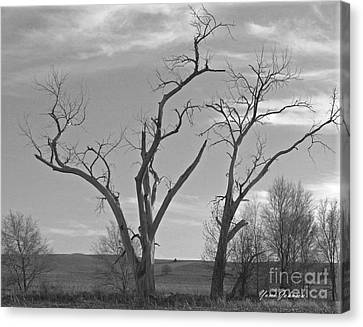 Canvas Print featuring the photograph An Old Trees by Yumi Johnson
