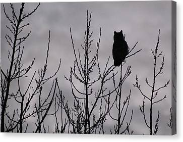 An Owl Silhouette Canvas Print