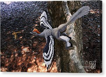 Anchiornis Huxleyi  Canvas Print by Julius Csotonyi