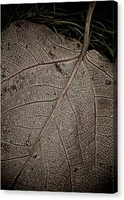 Ancient Skin Canvas Print by Odd Jeppesen