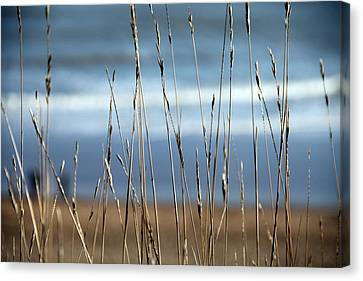 And Then The Sea Canvas Print by Jez C Self
