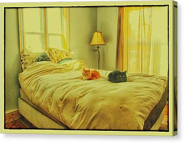 Canvas Print featuring the photograph Andi's Cats by Kimberleigh Ladd