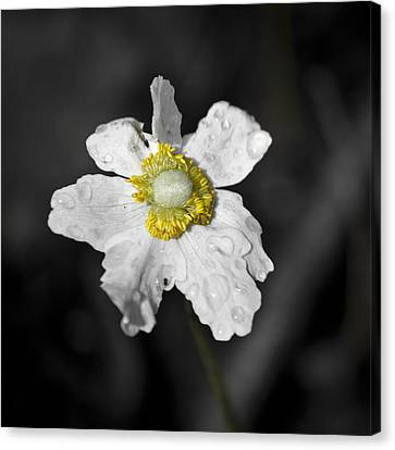 Anemone Desaturated Squared Canvas Print