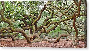 Canvas Print featuring the photograph Angel Oak by Val Miller