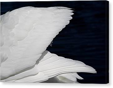 Angel Wings Canvas Print by Paulette Thomas