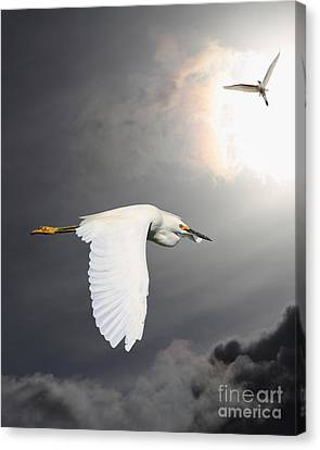Angels Of The Night Sky Canvas Print by Wingsdomain Art and Photography