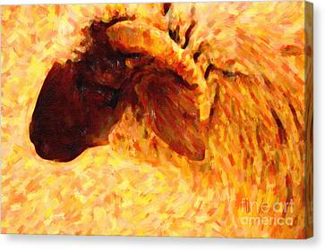 Angora Goat In Abstract Canvas Print by Wingsdomain Art and Photography