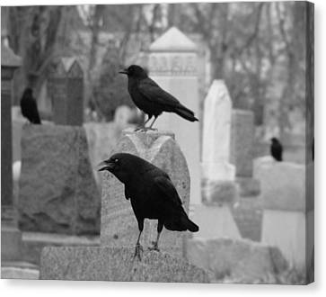 Angry Crow Canvas Print by Gothicrow Images