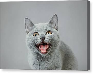 Angry Kitten Canvas Print by Waldek Dabrowski