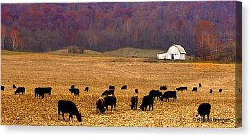 Canvas Print featuring the photograph Angus And Oaks  Farm by Randall Branham