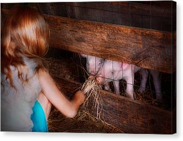 Animal - Pig - Feeding Piglets  Canvas Print