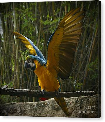 Animal Kingdom - Flights Of Wonder Canvas Print