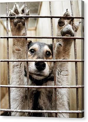 Animal Shelter, Russia Canvas Print by Ria Novosti