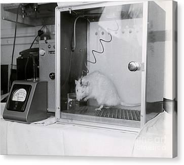 Animal Testing Canvas Print