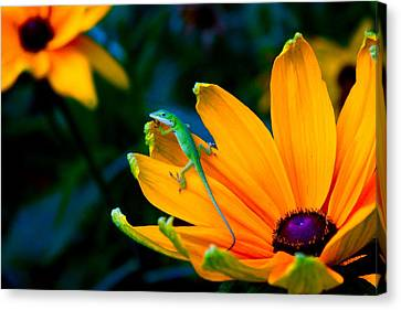 Anole On Yellow Flower Canvas Print by Katherine Altman