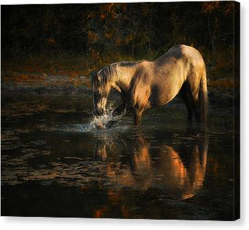 Another Morning At The Pond Canvas Print by Ron  McGinnis