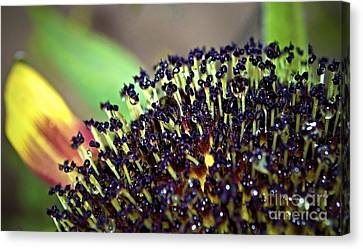 Digital Sunflower Canvas Print - Another Phase by Gwyn Newcombe