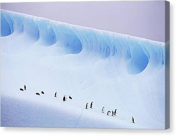Antarctica, South Orkney Islands, Chinstrap Penguins On Iceberg Canvas Print by Kevin Schafer