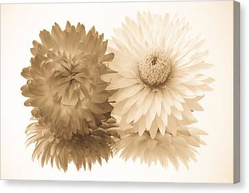 Antique Floral Duo Canvas Print by Heidi Smith