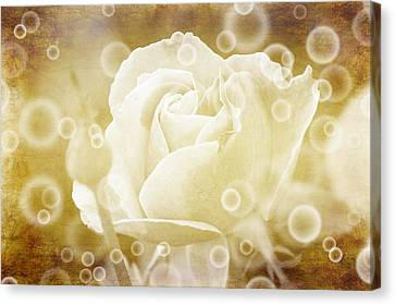 Antiqued Rose And Bubbles Canvas Print