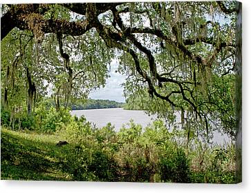 Apalachicola River Canvas Print by Paul Mashburn