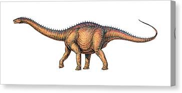 Apatosaurus Dinosaur Canvas Print by Joe Tucciarone