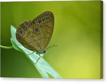 Canvas Print featuring the photograph Appalachian Brown by JD Grimes
