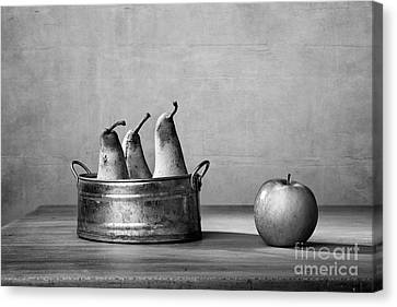 Apple And Pears 02 Canvas Print by Nailia Schwarz