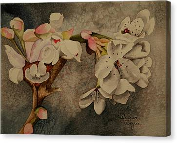 Canvas Print featuring the painting Apple Blossom by Teresa Beyer