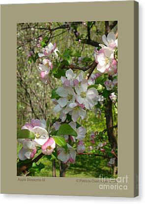 Apple Blossoms-ix Canvas Print by Patricia Overmoyer