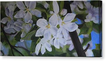 Apple Blossoms Canvas Print by Tammy  Taylor