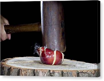 Apple Smashed With Mallet Canvas Print by Ted Kinsman