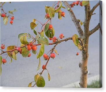 Canvas Print featuring the photograph Apple Tree by Bogdan Floridana Oana