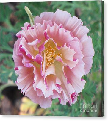Canvas Print featuring the photograph Appleblossom Poppy by Michele Penner