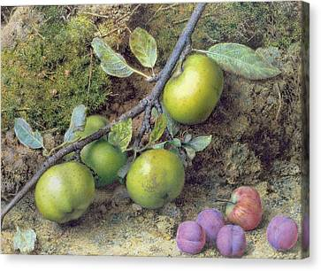 Apples And Plums On A Mossy Bank Canvas Print by John Sherrin