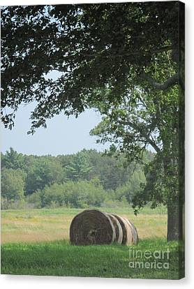 Appleton Canvas Print - Appleton Farm Hay Season by Barbara Milhender