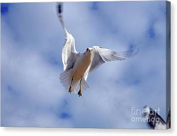 Canvas Print featuring the photograph Applying Brakes In Flight by Clayton Bruster