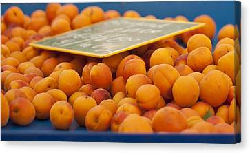 Apricots Canvas Print by Georgia Fowler