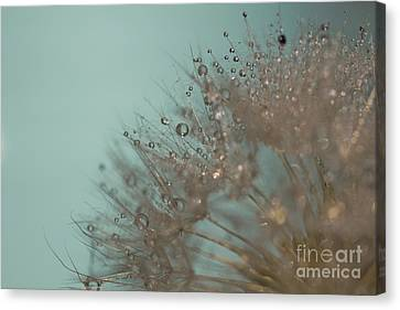 Seed Beads Canvas Print - Aqua Perfection by Megan Noble