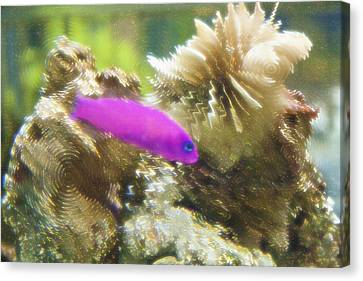 Aquarium Art 23 Canvas Print by Steve Ohlsen