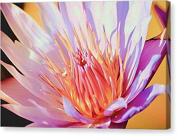 Aquatic Bloom Canvas Print by Julie Palencia