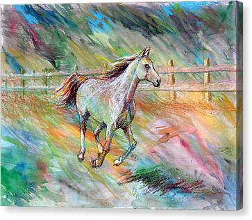 Canvas Print featuring the painting Arabian Dream Horse by Nancy Tilles