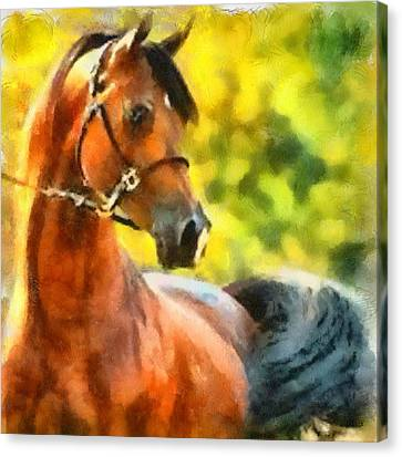 Canvas Print featuring the painting Arabian Stallion by Elizabeth Coats